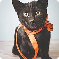 Adopt A Pet :: Hubbard - Hendersonville, NC