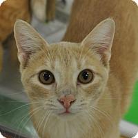 Adopt A Pet :: Benson - San Antonio, TX