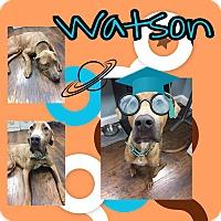 Adopt A Pet :: Watson - Colmar, PA