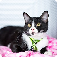 Adopt A Pet :: Oreo - Montclair, CA