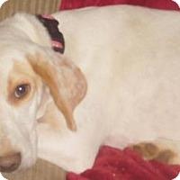 Adopt A Pet :: Robin - Rockville, MD