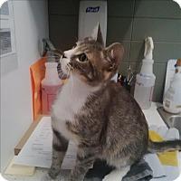 Adopt A Pet :: Willow - Nanaimo, BC