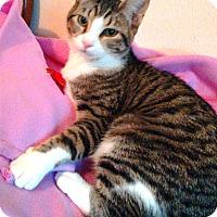 Adopt A Pet :: Alexa, a princess - Houston, TX