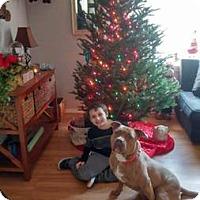 Adopt A Pet :: Honey aka Nestle - Williston, VT