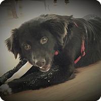 Adopt A Pet :: Noah Patrick - Alpharetta, GA
