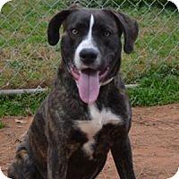 Adopt A Pet :: Brendan - Athens, GA