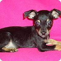 Adopt A Pet :: Dinker - Staunton, VA