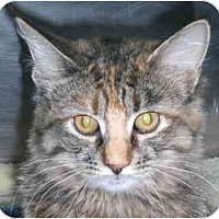 Adopt A Pet :: Ginger Spice - Lombard, IL