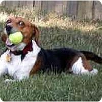 Adopt A Pet :: Alex - Novi, MI