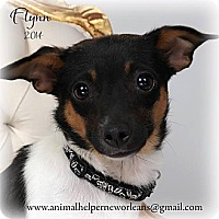 Adopt A Pet :: Flynn - Metairie, LA