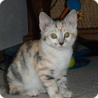Adopt A Pet :: Isabel (Izzy) - Portland, OR