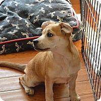 Adopt A Pet :: Kimiko - Manassas, VA