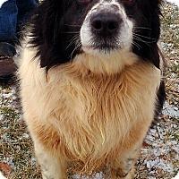 Adopt A Pet :: Dillon - Metamora, IN