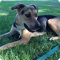 Adopt A Pet :: Lexie - Rancho Cucamonga, CA
