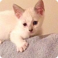 Adopt A Pet :: Sadie - East Brunswick, NJ