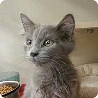 Adopt A Pet :: Babs - Berkeley Hts, NJ