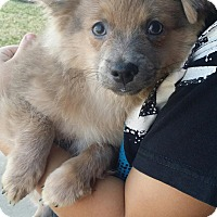 Adopt A Pet :: CLYDE - Rancho Cucamonga, CA