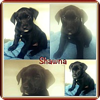 Adopt A Pet :: Shawna meet me 4/15 - Manchester, CT