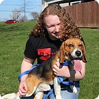 Adopt A Pet :: Forge - Elyria, OH