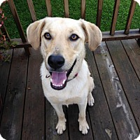 Adopt A Pet :: Ziti - Grafton, WI
