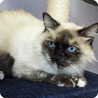 Adopt A Pet :: Sheemoo - Grants Pass, OR