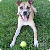 Adopt A Pet :: Scram - Warren, MI