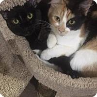 Adopt A Pet :: Cinder - Wasilla, AK