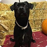 Adopt A Pet :: Raven - Reedsport, OR