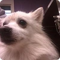 Adopt A Pet :: Flynn - Douglasville, GA