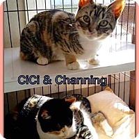 Adopt A Pet :: Chandler - Atco, NJ