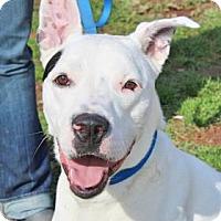 Adopt A Pet :: Frank - Spring City, PA