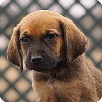 Adopt A Pet :: COME MEET Cat - Westport, CT