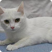 Adopt A Pet :: Julie - Portland, OR