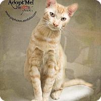 Adopt A Pet :: Forestal - Belton, MO