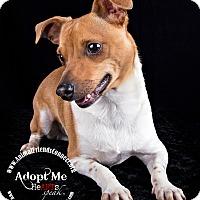 Adopt A Pet :: Bandit - Lodi, CA