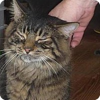 Domestic Shorthair Cat for adoption in Jackson, New Jersey - Monster