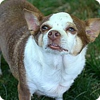 Adopt A Pet :: Margo - Xenia, OH