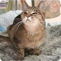 Adopt A Pet :: Lucy - Alexandria, VA