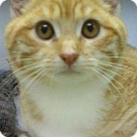 Adopt A Pet :: Dick Van Dyke - Richboro, PA