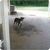 Adopt A Pet :: Delilah- Courtesy Listing - Killen, AL