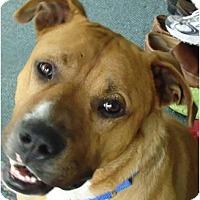Adopt A Pet :: Huey - Cleveland, OH