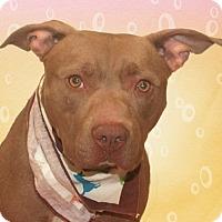 Adopt A Pet :: Sherlock - Cincinnati, OH