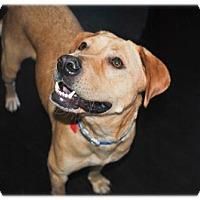 Adopt A Pet :: Monaville - Broomfield, CO