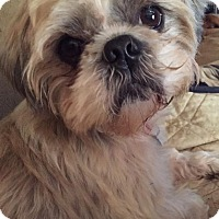 Adopt A Pet :: Rocky - Hendersonville, TN