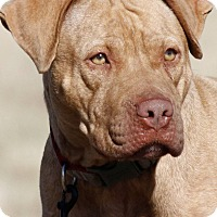 Adopt A Pet :: Chili - Broken Arrow, OK