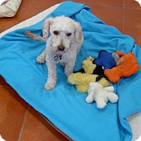 Adopt A Pet :: Quincy - Tucson, AZ