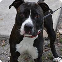 Adopt A Pet :: Achilles - Miami, FL