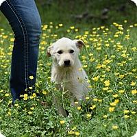 Adopt A Pet :: nova - Groton, MA