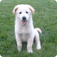 Adopt A Pet :: Sprite - West Chicago, IL