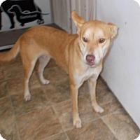 Adopt A Pet :: Justice - Lewisburg, TN